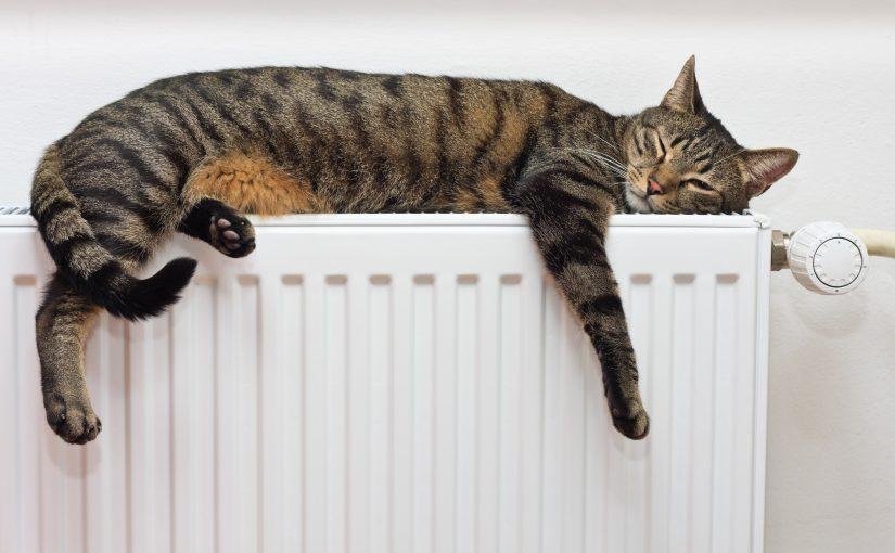 Кошка греется на стальном радиаторе